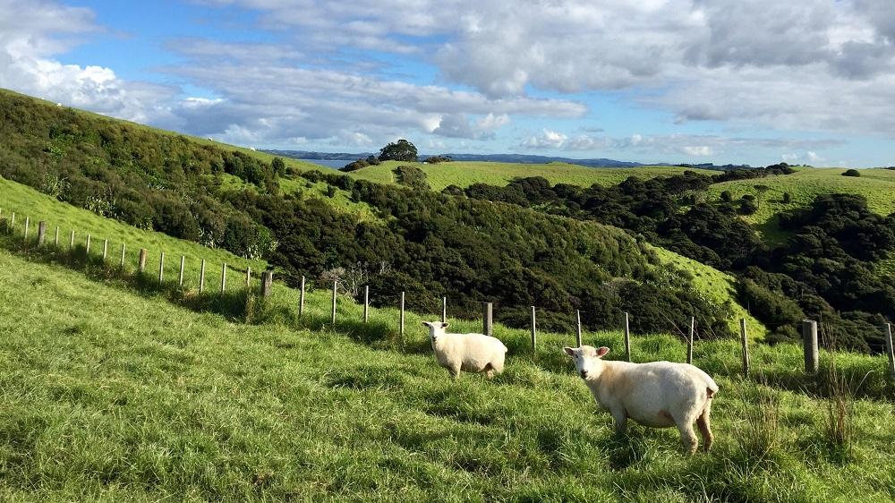 Roger J Kerr dice que el lobby ambiental / cambio climático está imponiendo imposiciones en nuestra industria principal que si continúan disminuirán el crecimiento económico y los niveles de vida en Nueva Zelanda
